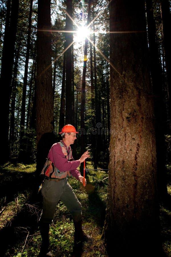 Forester em um noroeste pacífico fotografia de stock royalty free