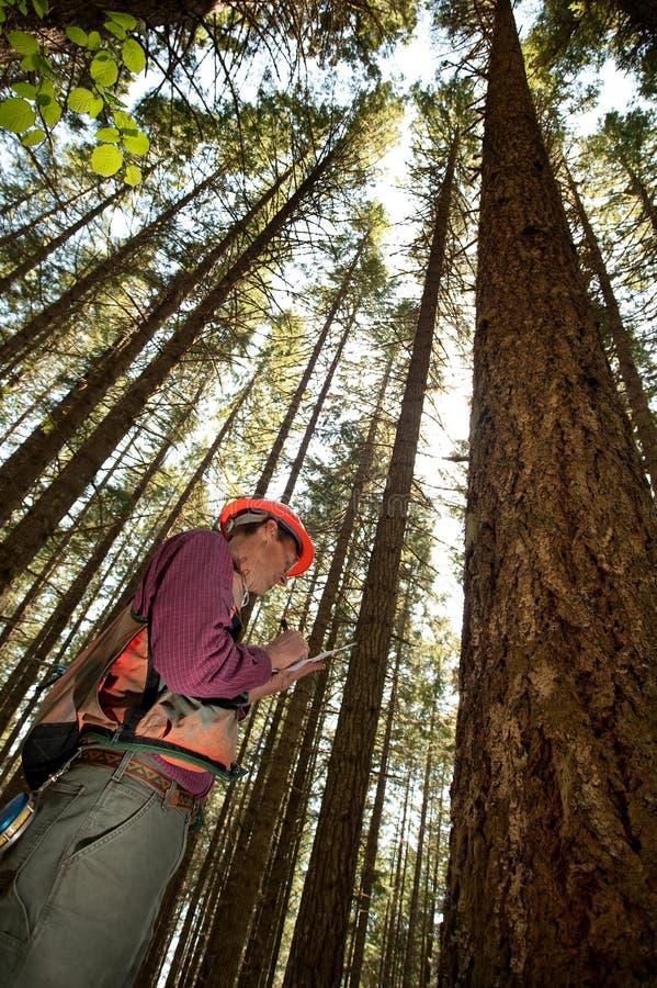 Forester em um noroeste pacífico fotografia de stock