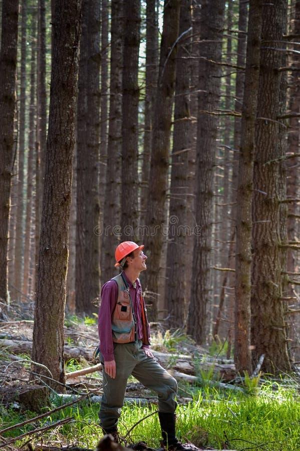 Forester em um noroeste pacífico foto de stock royalty free