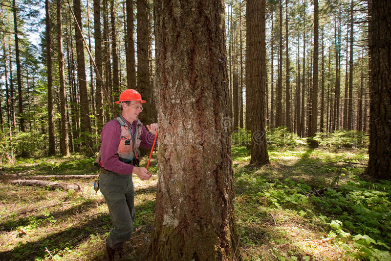 Forester em um noroeste pacífico fotos de stock