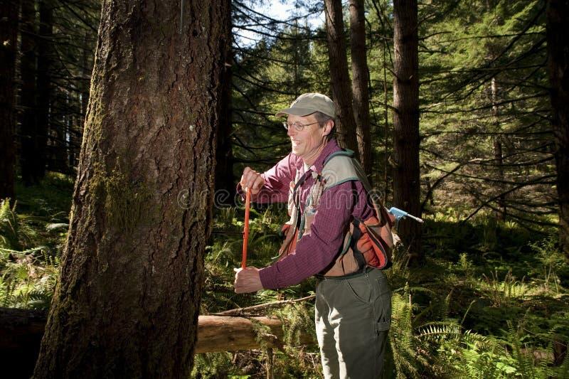 Forester em um noroeste pacífico fotos de stock royalty free