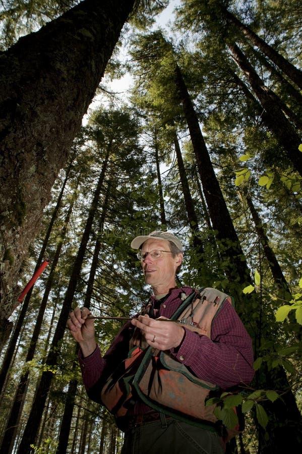 Forester em um noroeste pacífico imagens de stock royalty free