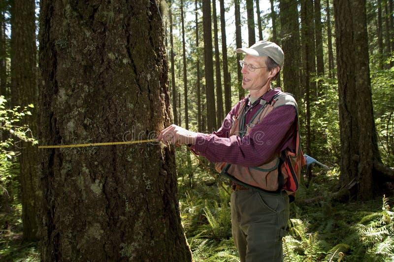 Forester em um noroeste pacífico imagem de stock royalty free