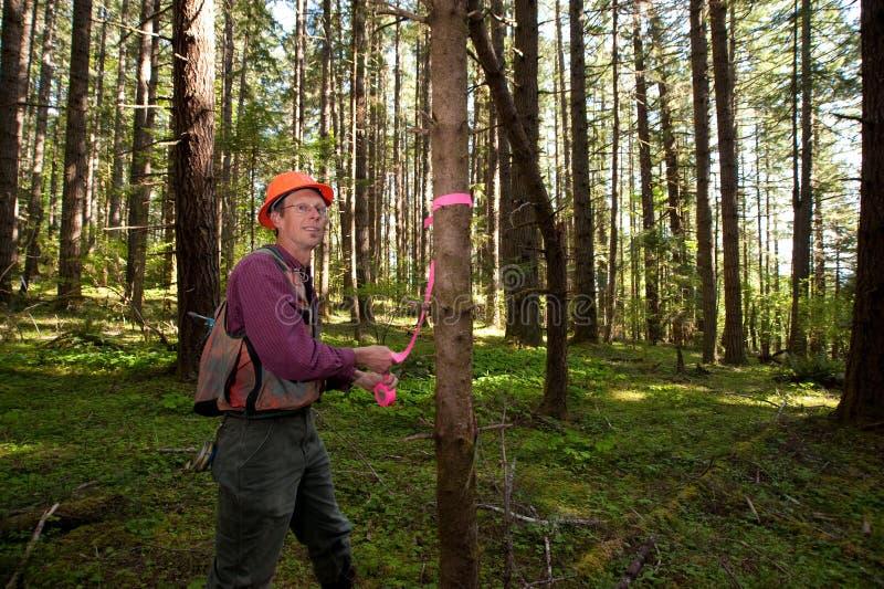 forester północny zachód Pacific obraz royalty free