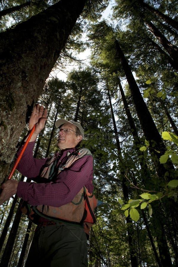forester północny zachód Pacific fotografia royalty free
