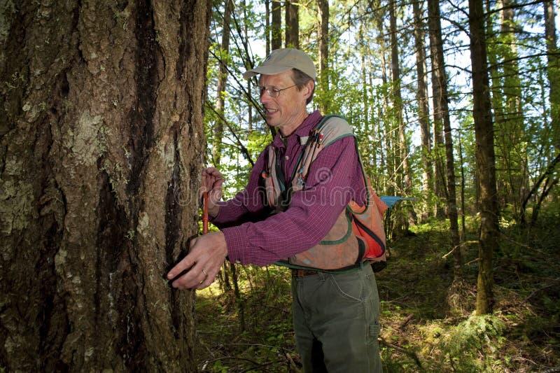 forester północny zachód Pacific obrazy stock