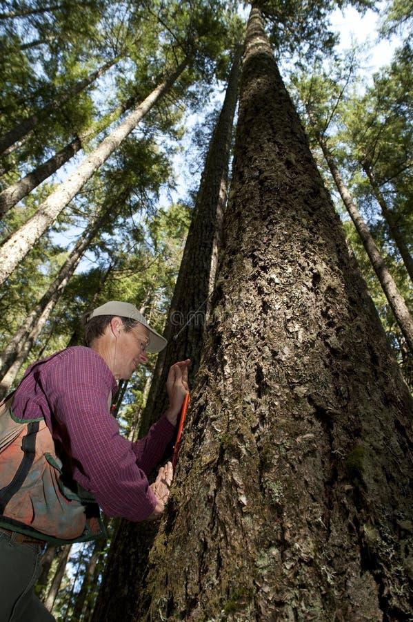 forester północny zachód Pacific zdjęcie royalty free