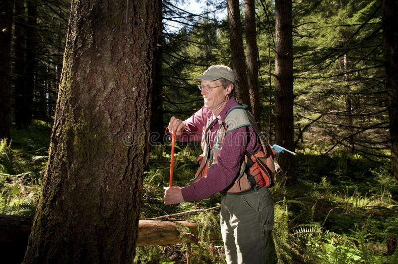 Download Forester In A Pacific Northwest Stock Photo - Image: 12716918