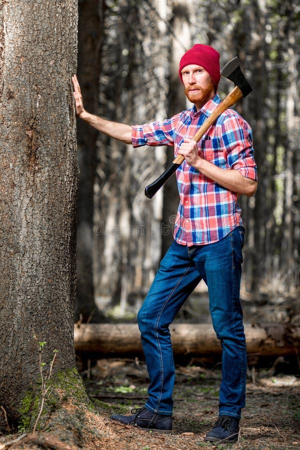 Forester sprawdza warunek drzewa w lesie zdjęcie royalty free