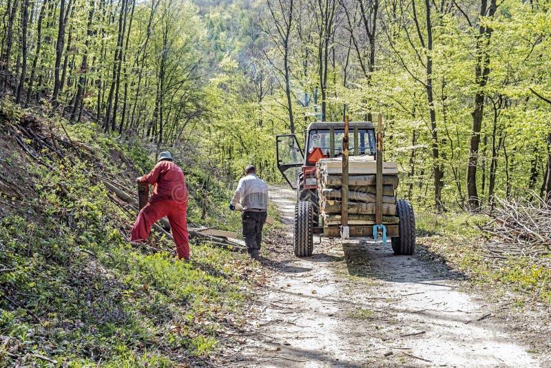 Foresters носят древесину из леса, Словакии стоковое изображение