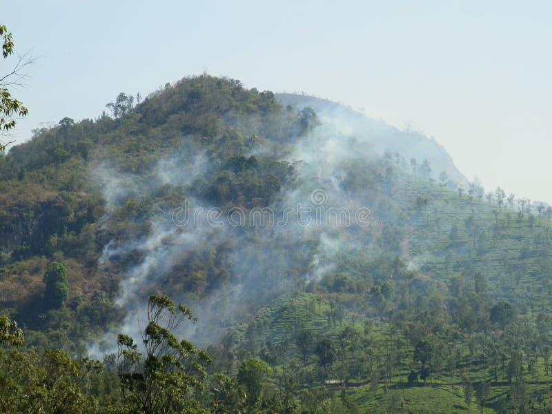 Forestfire di Nilgiri fotografia stock