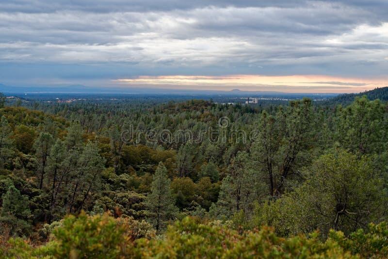 Forestland buiten Meer Shasta, Californië stock afbeeldingen