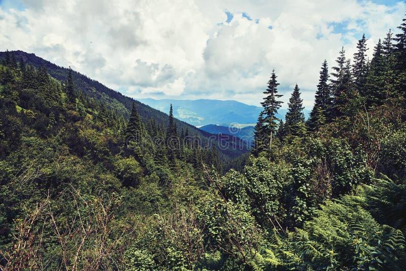 Forestn verde della montagna immagine stock