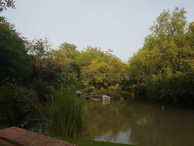 Forestpark in Bangkok stockfoto