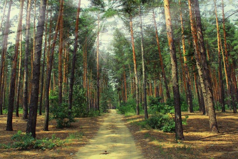 ForestPicturesque Украина стоковые изображения rf