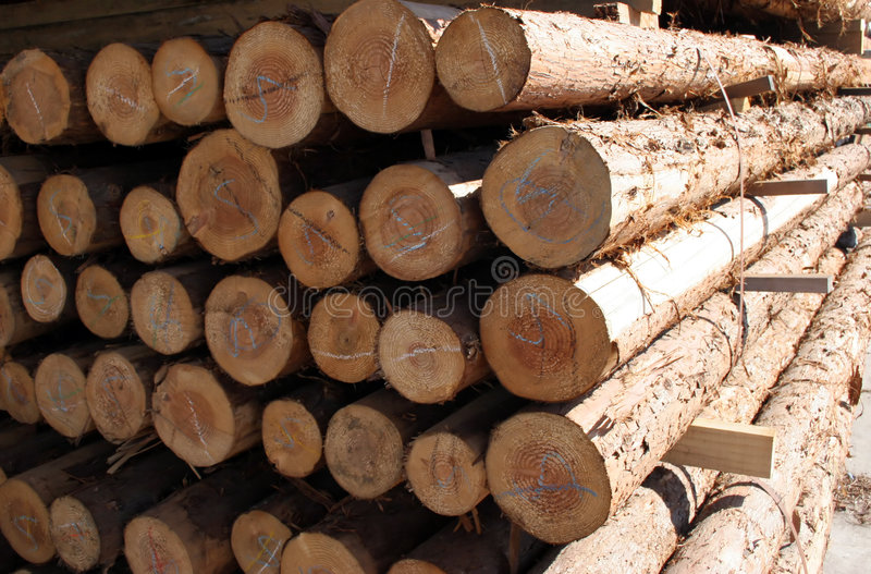 Download Forestry stock image. Image of fiber, build, country, nature - 508289