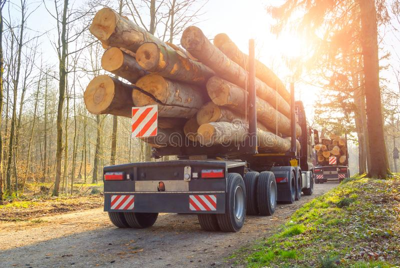 Forestry activity: transport of tree trunks. Forestry activity: large trucks transporting tree trunks through a forest, backlit shot with the sun stock photography
