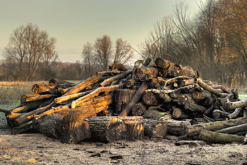 Download Forestry log pile in HDR. stock photo. Image of heap - 28632812