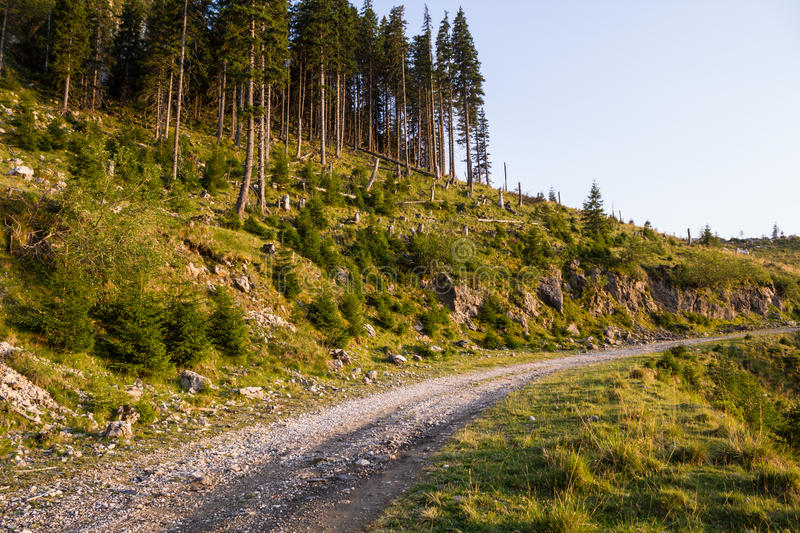 Forestry road. In reddish sunset light royalty free stock images