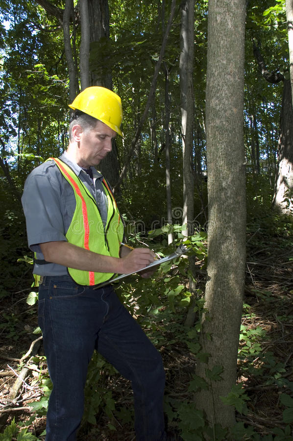 Free Forestry Worker, Man Working In Woods Royalty Free Stock Photography - 10720307