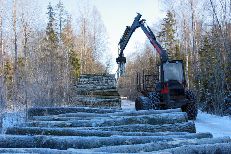Forestry works. Stacking trunks in winter, preparation for transportation royalty free stock image