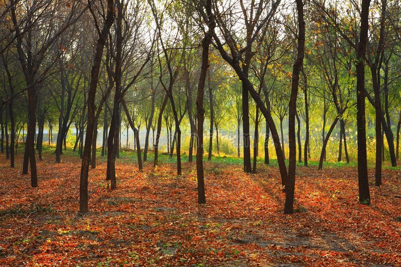 Download Forests stock image. Image of plants, green, forests, defoliation - 6949091