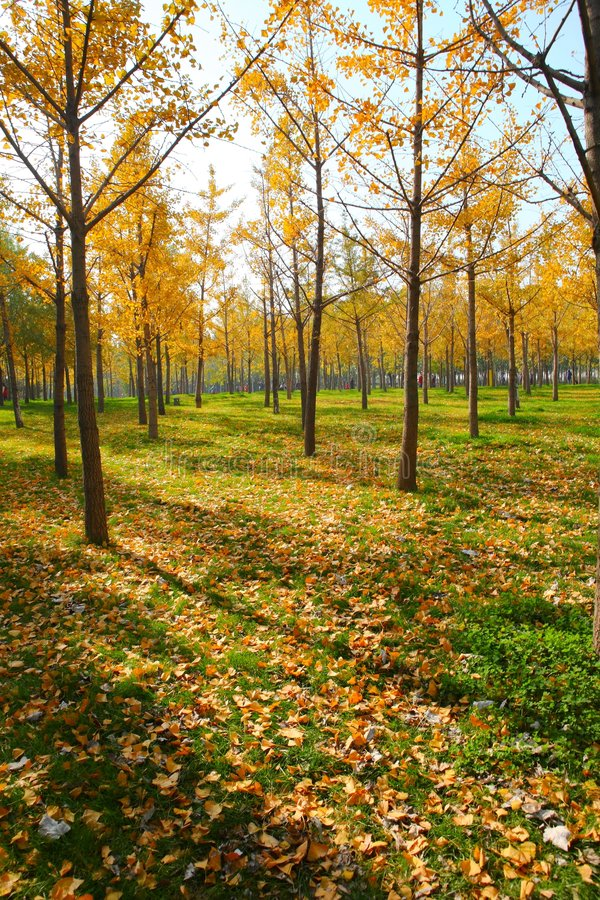 Download Forests Royalty Free Stock Photos - Image: 6950038