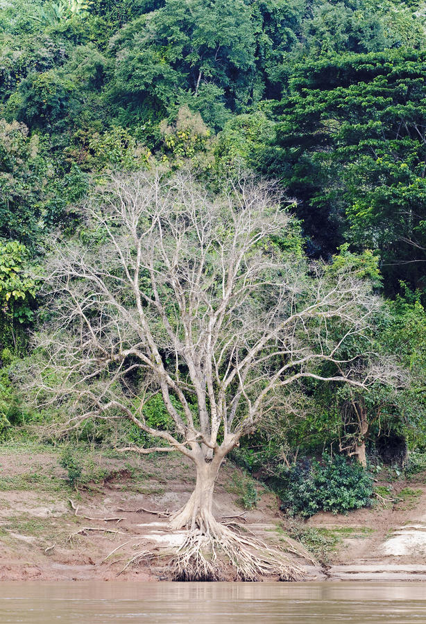 Forests in Laos in the area of the river Mekkong royalty free stock photography
