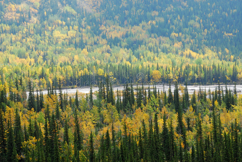 Download Forests in river valley stock photo. Image of colour, mountain - 7307686