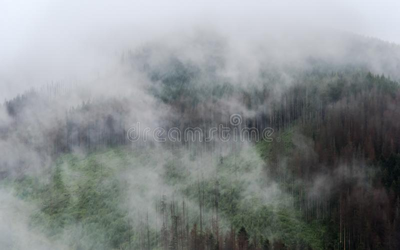 The forests of the tatra mountains are in the fog royalty free stock photos