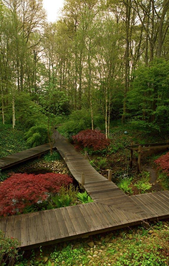 forestscape γαλήνιος στοκ φωτογραφία