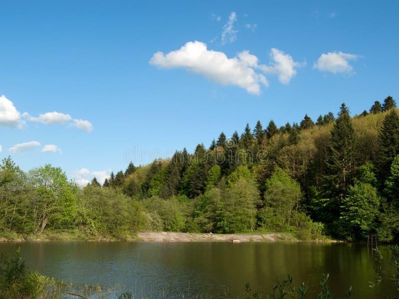 Forestsee stockfotografie