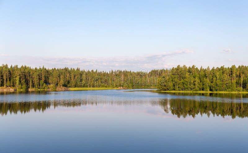 Forestsee am Sommer lizenzfreie stockfotos
