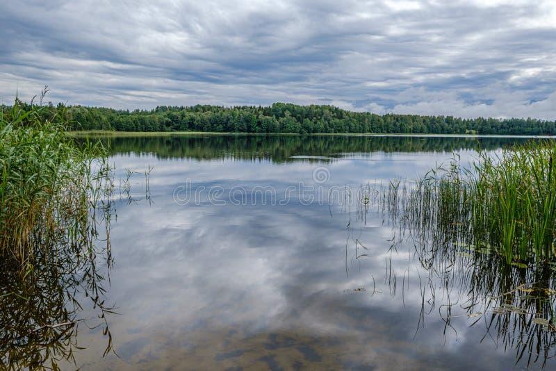Forestsee am Sommer stockbild