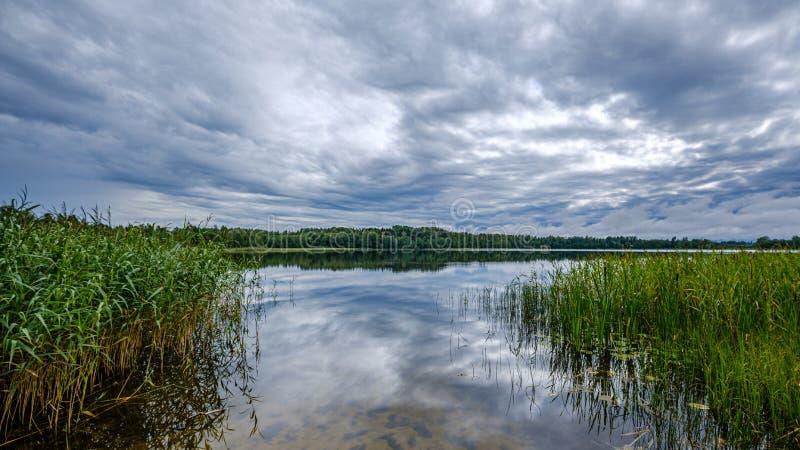 Forestsee am Sommer stockfotografie