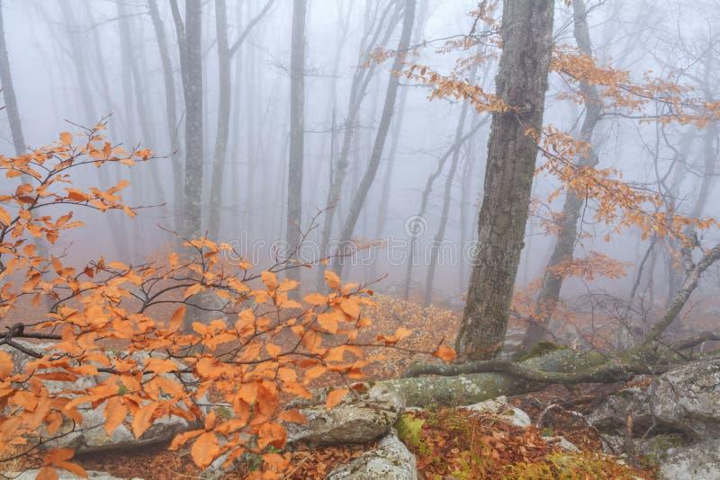 Forestt nevoento misterioso do outono fotos de stock royalty free
