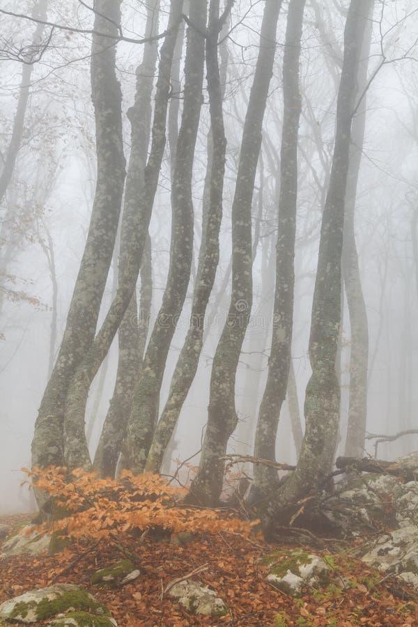 Forestt nevoento misterioso do outono imagem de stock