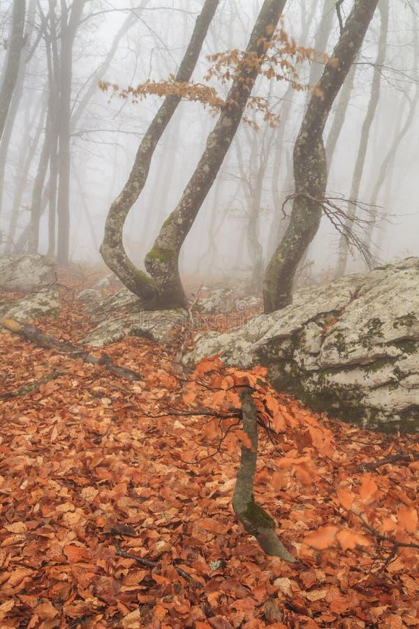 Forestt nevoento misterioso do outono fotografia de stock royalty free