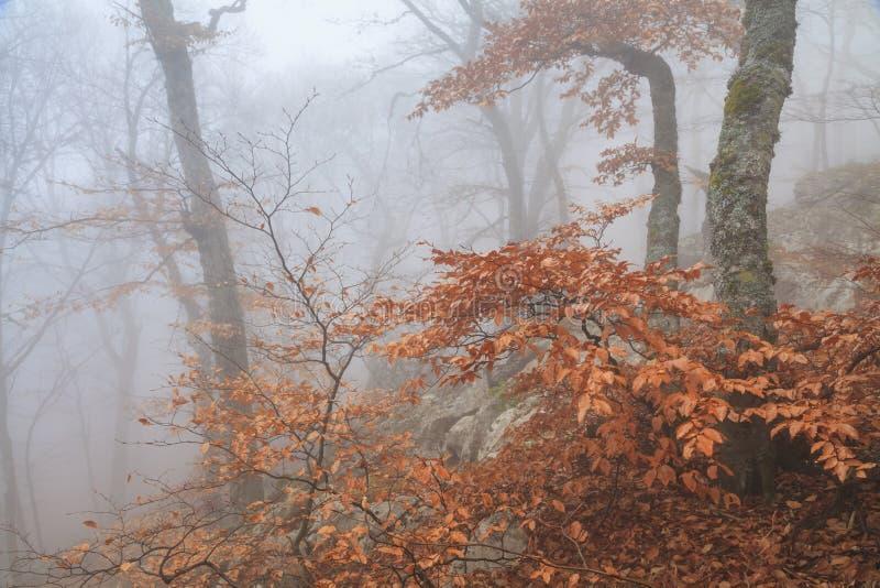 Forestt nevoento misterioso do outono imagens de stock