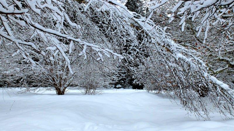 ForestTrees d'hiver dans la neige photographie stock libre de droits