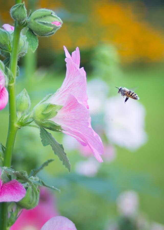 Forever de la abeja imagen de archivo libre de regalías