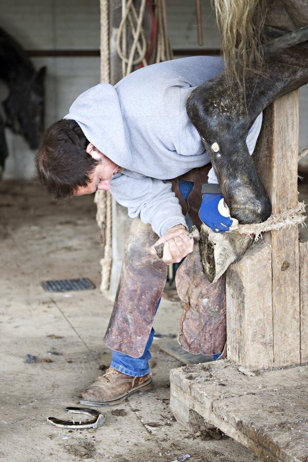 Forgeron Cleaning un sabot de chevaux photographie stock libre de droits
