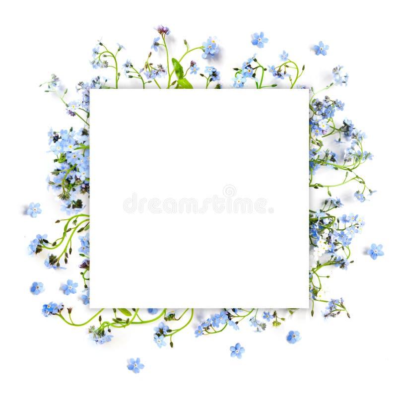 Forget-me-not μπλε δασικά λουλούδια - τετραγωνικό υπόβαθρο φύσης στοκ φωτογραφία με δικαίωμα ελεύθερης χρήσης