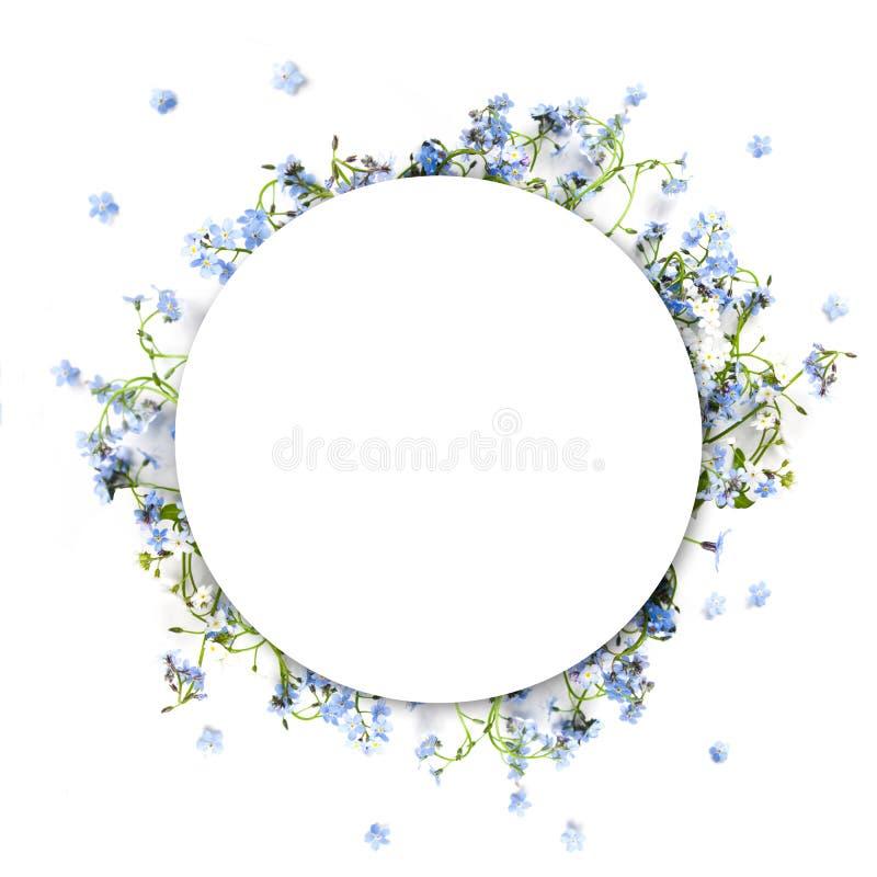 Forget-me-not μπλε δασικά λουλούδια - υπόβαθρο κύκλων φύσης στοκ εικόνα