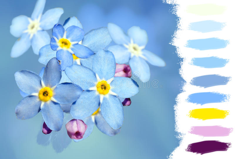 Forget-me-not Flower Color Palette Stock Photo