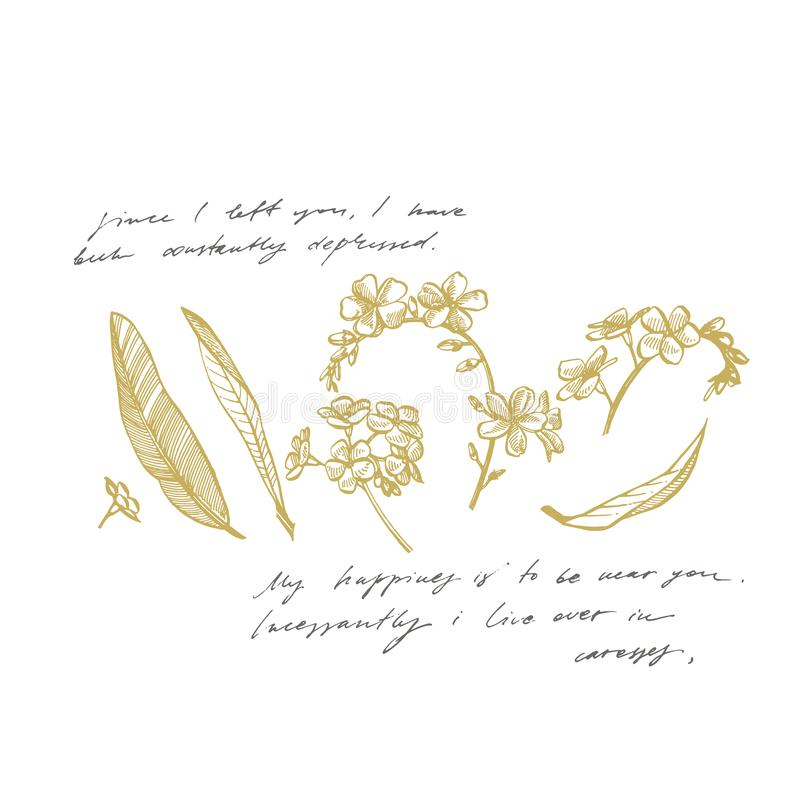 Forget-me-not flowers. Botanical illustration. Good for cosmetics, medicine, treating, aromatherapy, nursing, package royalty free illustration