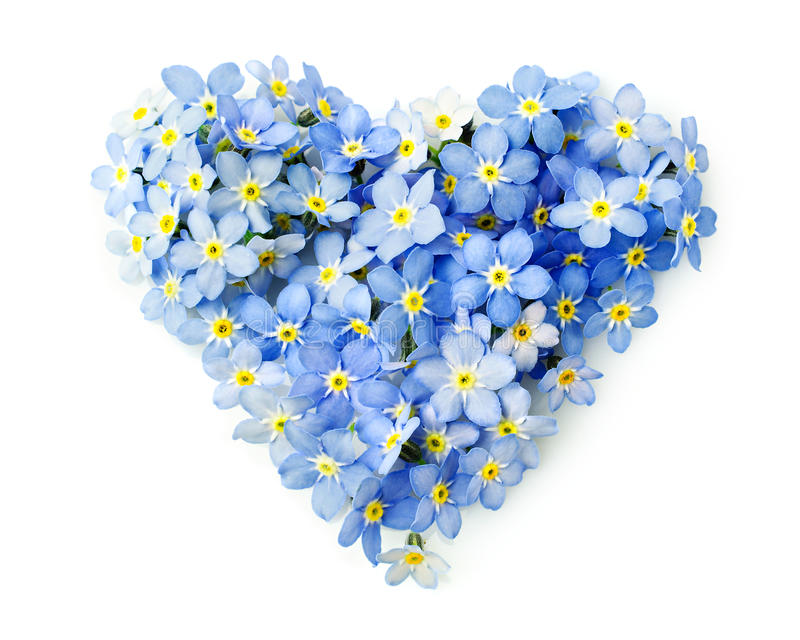 Forget-me-not flowers in a shape of a heart stock photos