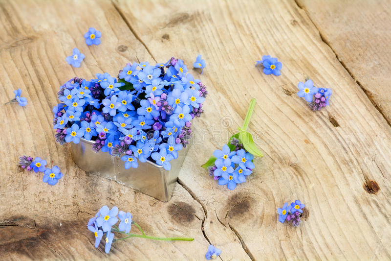 Forget-me-not flowers in a silver heart shape on rustic wood stock photo