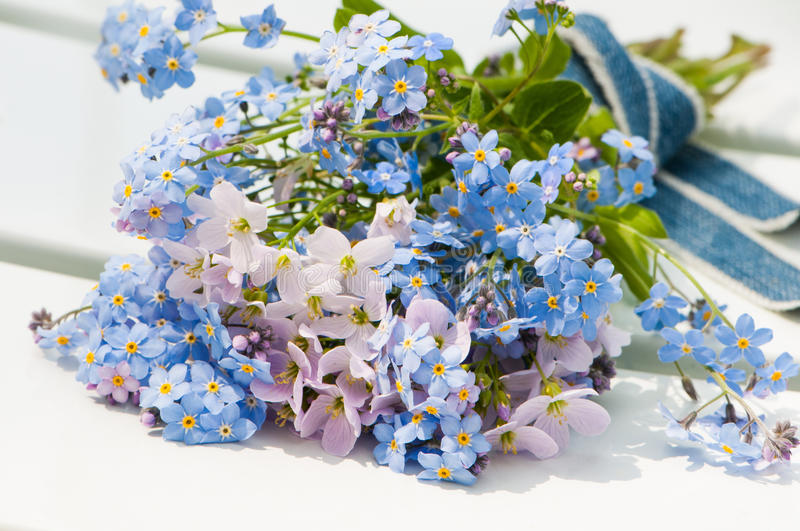 Download Forget-me-not stock photo. Image of macro, texture, details - 30874050