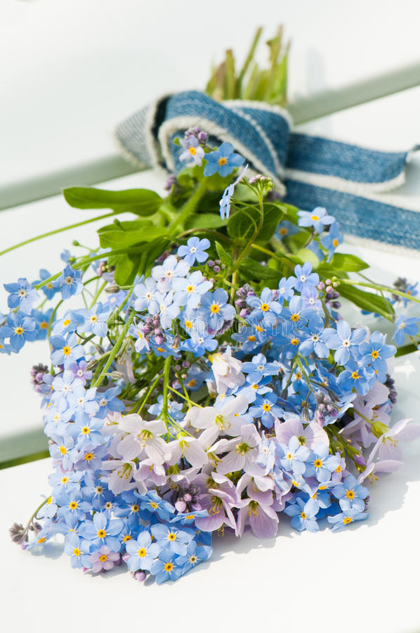 Download Forget-me-not stock photo. Image of blue, birthday, bunch - 30874056